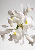 Dior Irisblüten