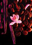 Weiße Blüten im Yves Saint Laurent Black Opium